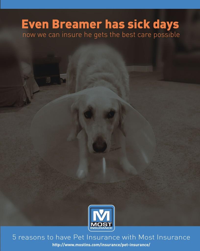 Pet Insurance Florida - Most Insurance